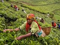 Кофейный маршрут Колумбии признали одним из лучших в мире