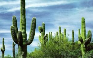 Новые туры по Мексике включают дегустации разных сортов мескаля