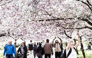 Дания: Кладбище Копенгагена стало главной достопримечательностью апреля