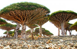 Сокотра (Socotra Island), Йемен