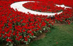 Турция: В Стамбуле начался фестиваль тюльпанов