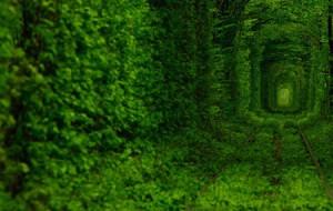 Тоннель любви в городе Клевань, Украина