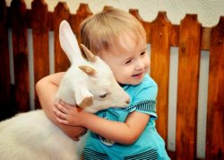 В Минске откроют зоопарки, где можно трогать и кормить животных