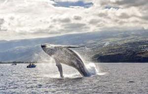 Франция: На острове Реюньон начался сезон наблюдения за китами