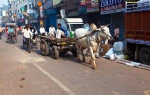 Индия предложит туристам новые путешествия по стране