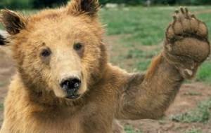 Туристов на Байкале предупреждают о частых выходах медведей