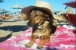 В Дубае открылся курорт для собак