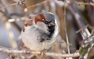 В Калининградской области открылся парк птиц