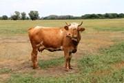 Волгоградская область приглашает туристов на фермы