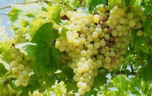 Крым привлечет туристов фестивалем вина