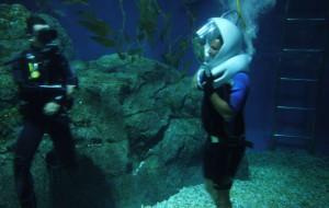 В Санкт-Петербурге можно поплавать с акулами
