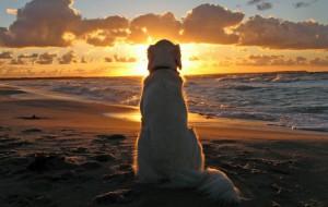 В Греции теперь есть пляж для домашних животных