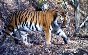 Россия: В Приморском крае появится новый национальный парк