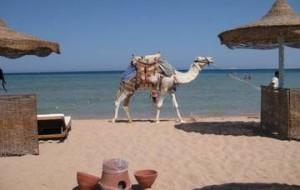 Египет: к Рождеству туристов может не остаться