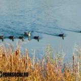 Россия: В Сочи в разгаре сезон наблюдения за птицами