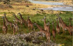 Покупая сувениры в Танзании, не забудьте приобрести лицензию