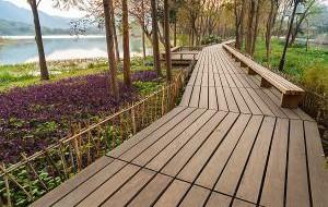 Нидерланды: В Эммене построят велосипедную дорожку из дерева