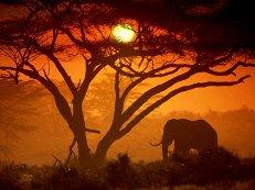 Кения удешевляет отдых туристов