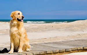 Испания: Собака — тоже человек