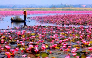 В Таиланде запускают агро-туристический проект около Бангкока