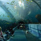 В Хорватии открылся аквариум за 5 миллионов евро