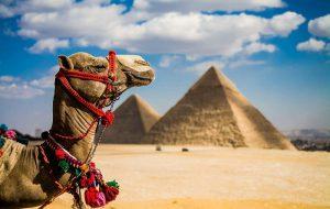 Египет обозначил сроки выполнения требований РФ