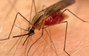 Таиланд предупреждает туристов об опасности заболеть малярией