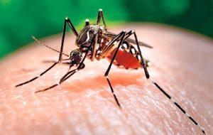 На Самуи — вспышка лихорадки денге