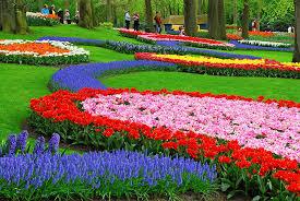 Голландский цветочный парк Кёкенхоф откроет сезон 23 марта