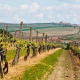 В Чехии пройдет винный веломарафон