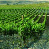 Рост винного туризма в Испании