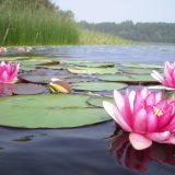 В Калмыкии пройдет Фестиваль лотосов