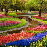 Сезон в голландском цветочном парке Кёкенхоф начнется 22 марта