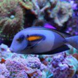 Туристы на Мальдивах за 50 000 долларов могут поспать с рыбами