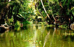 В индийском штате Керала вспышка лептоспироза