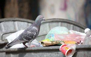 В Бангкоке за кормление «летающих крыс» будут сажать в тюрьму