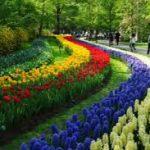 Голландский цветочный парк Кёкенхоф откроет сезон 21 марта