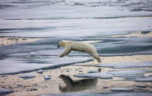 Туры в нацпарк «Русская Арктика» могут стать дешевле в 5 раз
