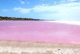 Розовое озеро на границе с Казахстаном попало на карандаш ЮНЕСКО