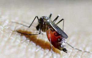 Ростуризм: на Филиппинах объявили эпидемию лихорадки денге