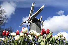 Больше никаких Голландий! Власти Нидерландов меняют имидж страны