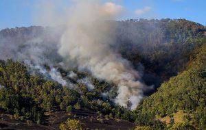 В Австралии сгорел миллион гектаров леса. Дальше будет хуже, считают эксперты