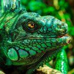 Чем и кому опасны селфи с дикими животными? Слово эксперту из Коста-Рики