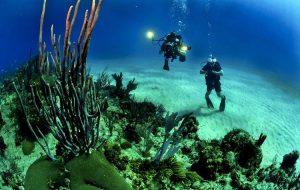 Какие места на Мальдивах лучше всего подходят для дайвинга