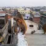 Дикие животные захватывают улицы опустевших городов, но пока это неопасно