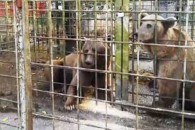 В Сочи проверят все базы отдыха из-за гибели ребенка после нападения медведей