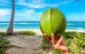Кокосовое масло первого отжима показало положительные результаты в лечении коронавируса