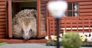 В Великобритании открыли парк отдыха для ежей