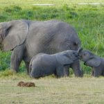 В Кении началась первая официальная Перепись дикой природы