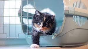 Utair разрешила перевозить животных в пассажирских креслах